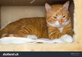 cat in house domestic cat house stock photo 582659845