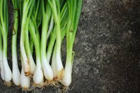 Types Of Pumpkins Grown In Uganda by 8 Easy Vegetables U0026 Herbs To Grow Indoors Care2 Healthy Living