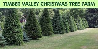Pinecrest Christmas Tree Farm by Agriculture In Medina County Visit Medina County