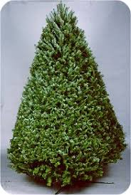 Best Kinds Of Christmas Trees by National Christmas Tree Association U003e All About Trees U003e Tree