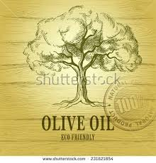 Olive oil Vector olive tree For labels pack Eco friendly