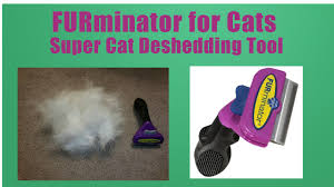 My Short Haired Dog Sheds A Lot by Furminator For Cats Best Deshedding Tool On The Market Help For