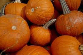 Tulsa World Pumpkin Patch by Your Guide To Tulsa U0027s Biggest Fall Festivals Slideshows