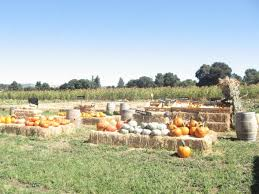 Napa Pumpkin Patch Hours by 5 Pumpkin Patches To Visit With Your Family Suisun City Ca Patch