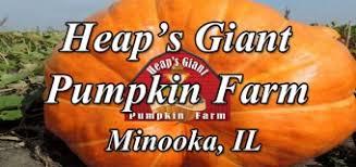 Dollingers Pumpkin Farm Minooka Il by Pumpkin Farms Archives Chicagofun Com