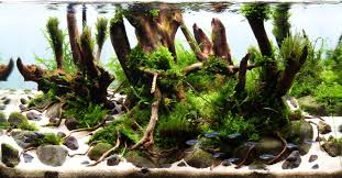 Interview With Aquascaper Mikolaj Weterle | Aquascape Awards Aquascape Of The Month June 2015 Himalayan Forest Aquascaping Interesting Driftwood Placement Aquascapes Pinterest About The Greener Side Aquascaping Design Checklist Planted Tank Forum Simons Blog Decoration Bring Nature Inside Home Ideas Downhill By Arie Raditya Aquarium 258232 Aquaria Creating With Earth Water Fire Air Space New Aquascapemarch 13 2016page 14 Page 8 Aquapetzcom Magical Youtube 386 Best Tank Images On Aquascape
