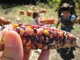 Pumpkin Patch In Yucaipa Hours by Apple Picking At Riley Farms In Glen Oaks Julie U0027s Kit Chen