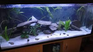 Extra Large Fish Tank Decorations by Extra Large Slate Diy Cave Aquarium Slate Cave Decoration Ebay