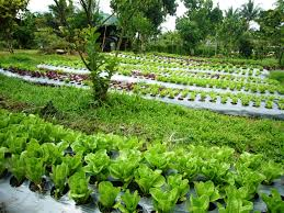 Laguna Farm | Organic Etc. Best 25 Urban Farming Ideas On Pinterest What Is Organic Farming In The Philippines Reality Tv Episode 17 Fishy The Backyard Homestead Produce All Food You Need Just A Gardening Aquaponics Tips Youtube Cheap Methods Find Deals Easy Home Office Backyards Cozy In Eco Pics On 665 Best Gardening Images Benefits 171 Garden Pests Pests