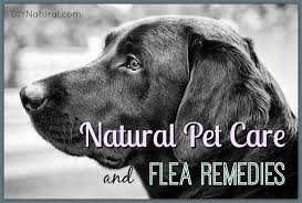 Homemade Flea Powder For Carpet by Natural Flea Remedies And Other Natural Pet Care Solutions