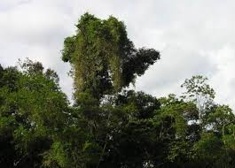 Define Carbon Sink Geography by What Is A Carbon Sink