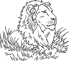 African Savanna Animals Coloring Pages 26549