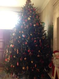 Fraser Fir Christmas Trees North Carolina by Clements Christmas Tree Delivery Service Nashville And Surrounding