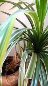 was ist das für eine pflanze und ist sie für haustiere