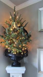 Tabletop Live Christmas Trees by Acanthus And Acorn November 2011