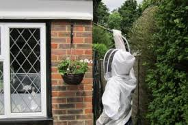 wasp nest removal sittingbourne 癸45 wasp