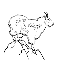Wild Animal Coloring Page Mountain Goat Sheets