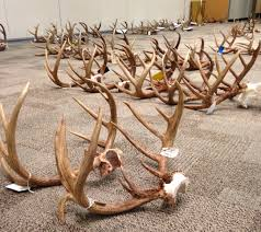 Truck-Buck Scoring Details For 2017-2018 Season Big Buck Mega Truck Goes Wild Youtube Photos From Big Rig And Vintage Racing At Anderson Motor Bucks Trucks Photo Lifted Trucks Pinterest Thailands Fire Cost Automology Automotive Muddy Ole Childrens Apparel Rural Lafayette County Buck Crushes State Archery Record Giant 24 Point Buck Hit By Car In Ohio Save On Sales Supplies Saleinabox Chevy Pickups Fetch Big Bucks In Collector Car Market Kids Short Sleeve Tshirt Privategarb Irl Intertional Centres Ltd New Dealership Kamloops Monogrammed Ducks And Shirt