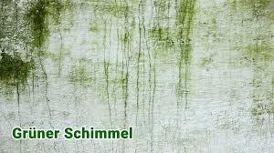 grüner schimmel wie gefährlich ist grüner schimmelpilz