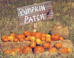 Pumpkin Patch Houston Oil Ranch by 50 Best Pumpkin Patch Activities Images On Pinterest Pumpkin