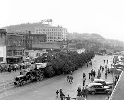 Silver Tip Christmas Tree Sacramento by World U0027s Tallest Christmas Tree 153 U0027 Arrives On Railroad Ave