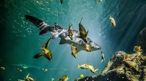 sharks aquarium la rochelle
