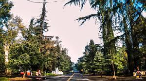 Christmas Tree Lane Fresno by Christmas Tree Lane In Fresno Ca December 2015 Youtube
