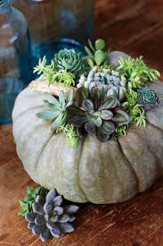 Keep Pumpkins From Rotting On Vine by Here U0027s How To Grow Your Own Pumpkin Southern Living