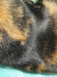 my cat has dandruff dandruff in 2 year cat the daily kitten