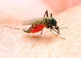 hausmittel gegen mücken so schützen sie sich tippscout de