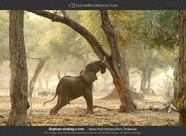744 Serengeti Safari Tours Offered By 248 Tour Operators