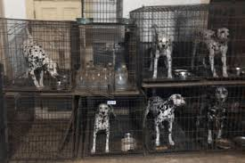 Humane Society 'Horrible 100' List 2017 Of Worst Puppy Mill ... Pets As Pilgrims Photos Peoplecom Contra Costa Animal Services Home Facebook 180 Best Dog Of Honor Images On Pinterest Marriage Wedding Dogs Bird 5 Darnick Street Underwood Qld 4119 Indtrialwarehouse For Pet Food Care Accsories Big W 91 Dogs In Weddings Shop Warehouse Buy Supplies Online Petbarn 332 Of Course My The Hooves And Paws Rescue Heartland Inc A Place To Heal