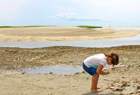 The Beach At Wellfleet Bay Is One Of Many Pristine Spots To Find A Keepsake Shell