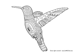 Adult Coloring Page Hummingbird