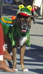 Tompkins Square Park Halloween Dog Parade 2016 by Some Puppy To Love 2013 Halloween Pet Parade In Pictures