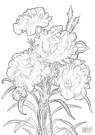 Click The Scarlet Carnation Coloring Pages