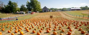 Pumpkin Picking Harford County Maryland by Fall Farm Fun Marylands Best