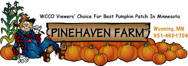 Best Pumpkin Patch Near Roseville Ca by Pinehaven Farm Pumpkins Pumpkin Patch Jack O Lantern