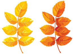 Fall Leaves Clipart PNG Image
