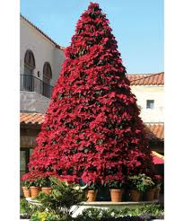 Flagpole Christmas Tree by Poinsettia Tree Frame 12 5 U0027 13 5 U0027 W Plants