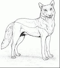 Remarkable Go Back Images For Wolf Coloring Page With Pages And