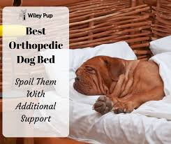 Top Rated Orthopedic Dog Beds by Best Orthopedic Dog Bed Additional Support Wileypup Com