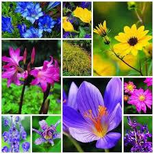 10 fall plants top perennial flowers bulbs garden design