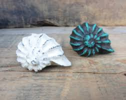 Real Seashell Cabinet Knobs by Sea Shell Knobs Etsy
