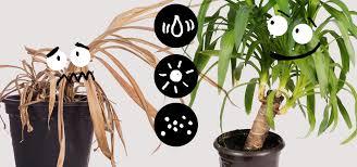 so tötest du deine zimmerpflanzen nicht 10 praktische tipps