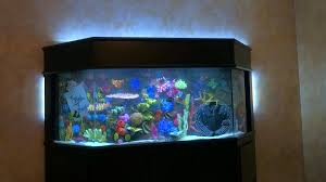 Star Wars Fish Tank Decorations by Tanked U0027 Recap Chris Jericho Wants To Build U0027the Tank Of Jericho U0027