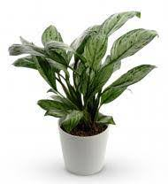 Plants In Bathroom Good For Feng Shui by Best Plants To Put In The Bathroom Steam Shower Inc