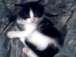 cat wont eat 6 week kitten won t eat