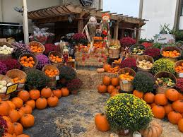 Pumpkin Patch Fresno Clovis by Vons Twitter Search