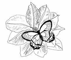 Detailed Coloring Pages For Adults Printable Kids Colouring Butterfly And Flower Mandala